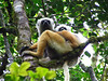 Madagascar : 260 pictures with captions
